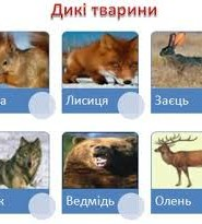 дикы тварини загадки