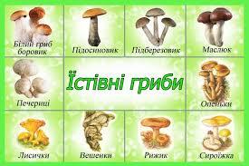 гриби загадки