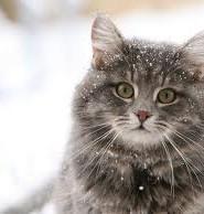художній твір опис кота