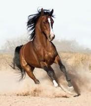 опис коня