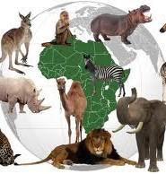 загадки про тврин африки