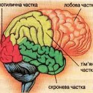 мозок частини