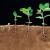 ріст рослин