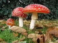 отруйні гриби