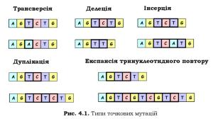 genetyka-84