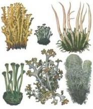 представники мохів