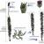 розмноження мохів