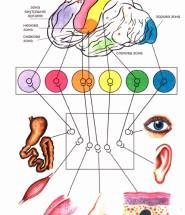 сенсорні системи