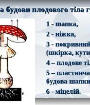 будова грибів
