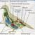 внутрішня будова птахів