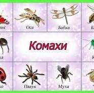 комахи цікаві факти