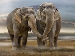 слон цікава інформація