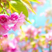 весна вірші