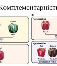 взаємодія налельних генів