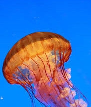 медузы интересные факты