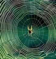 павук прикмети