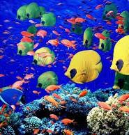 червоне море цікаві факти