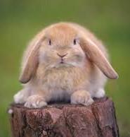 кролик цікаві факти