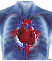 серце цікавинки