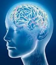 спинний мозок цікаві факти
