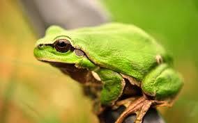жаби цікаві факти