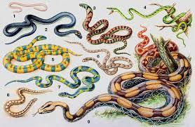 змія цікаві факти