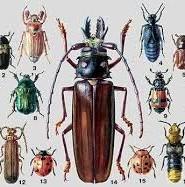 жуки цікаві факти