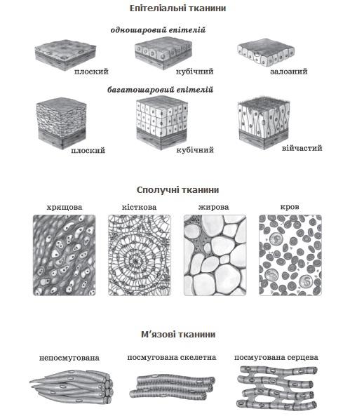 тканини види
