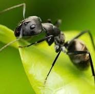 мурахи цікаві факти