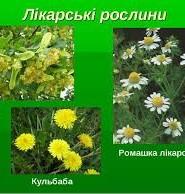 рослини україни цікаві факти