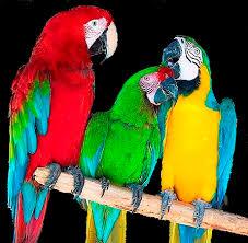папуги цікаве